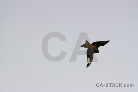 Bird flying sky animal gray.