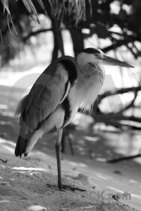 Bird heron animal gray.