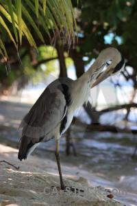 Bird heron animal green.