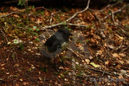 Bird lake sylvan trek animal branch new zealand.