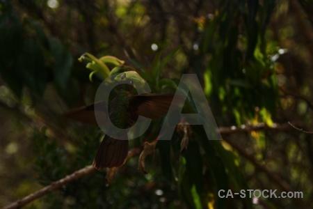 Bird peru inca animal branch.