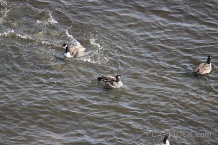 Bird pond aquatic animal water.