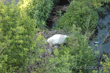 Bird pond aquatic water animal.