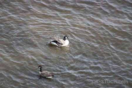 Bird pond water aquatic animal.