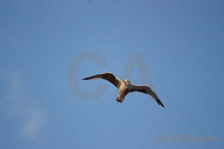 Bird sky animal seagull flying.