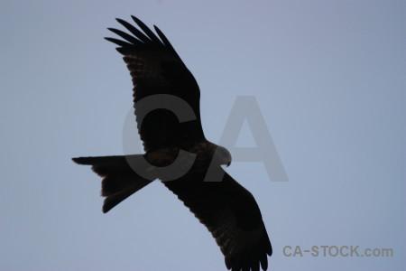 Bird sky flying animal.