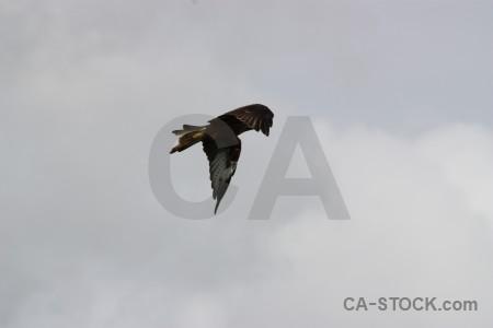 Bird sky flying gray animal.