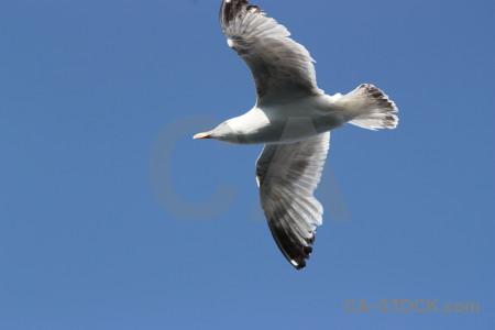 Bird sky flying seagull animal.