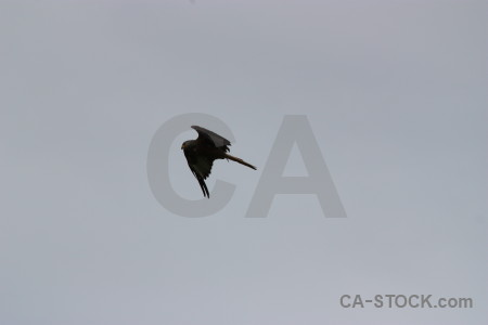 Bird sky gray animal flying.