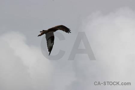 Bird sky gray animal flying.