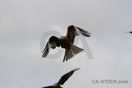 Bird sky gray flying animal.