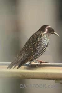 Bird starling animal.