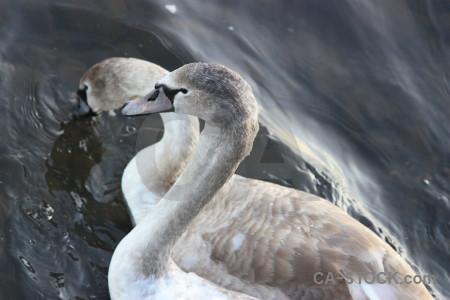 Bird water animal pond aquatic.