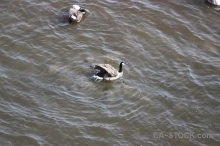 Bird water aquatic animal pond.