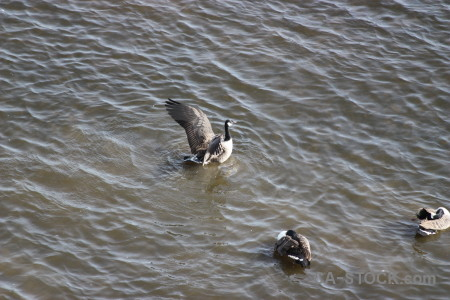 Bird water aquatic pond animal.