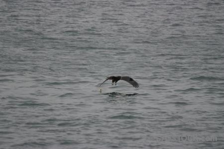 Bird water southeast asia vinh ha long sea.