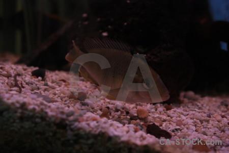 Black animal fish.