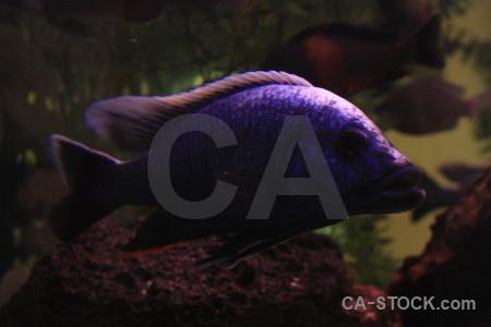 Black fish animal.