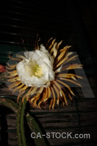 Black flower petal plant spain.