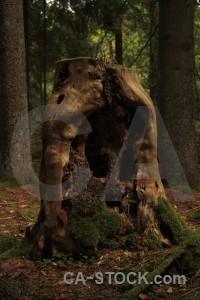 Black tree brown stump.