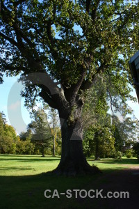 Black tree single green.