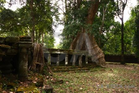 Block banyan tree unesco grass pillar.
