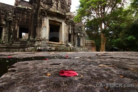 Block tree ruin khmer temple.