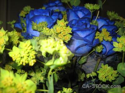 Blue flower yellow plant green.