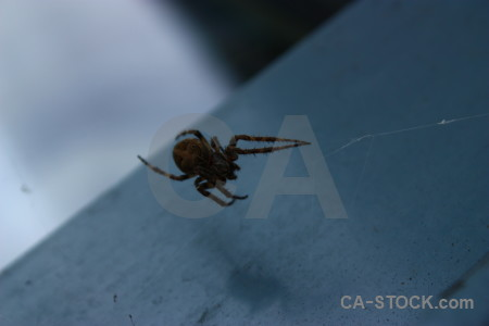Blue spider insect animal.