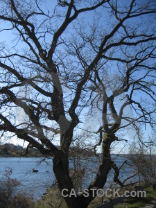 Blue tree single.