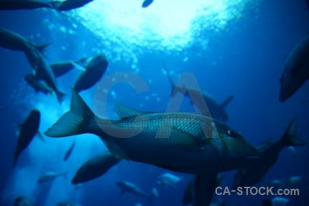 Blue uae fish underwater asia.