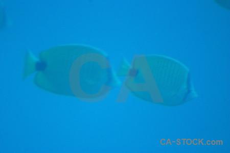 Blue underwater cyan.