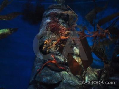 Blue underwater seaweed.