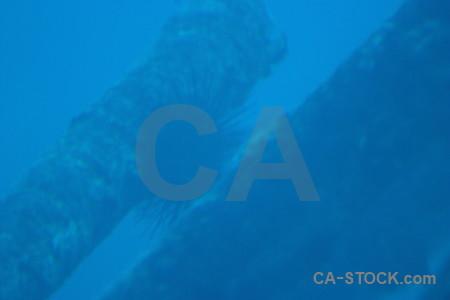 Blue wreck underwater.