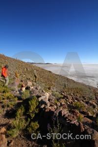 Bolivia andes salt altitude plant.