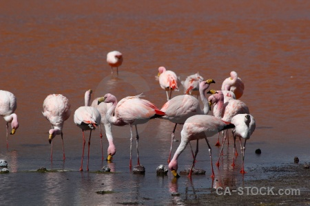Bolivia lake animal bird salt.
