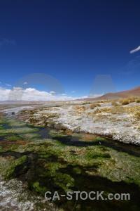 Bolivia plant grass laguna chalviri landscape.