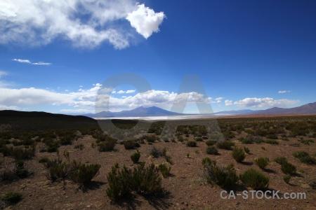 Bolivia salar de chiguana bush sky salt flat.