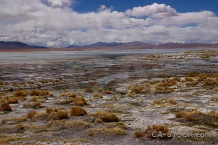 Bolivia sky snowcap bush andes.