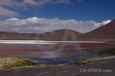 Bolivia south america laguna colorada water mountain.