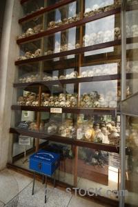 Bone skull mass grave cambodia khmer rouge.