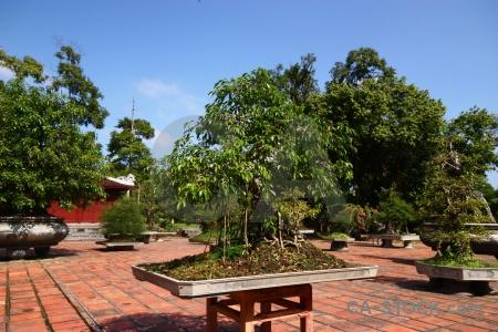 Bonsai tile plant garden bonzai.