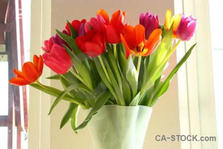 Bouquet flower tulip plant vase.