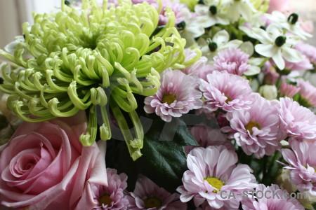 Bouquet green flower rose plant.