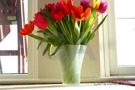 Bouquet plant flower tulip vase.