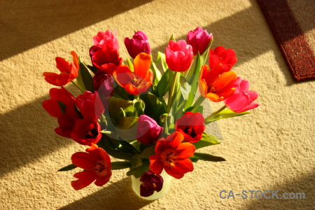 Bouquet plant vase flower tulip.