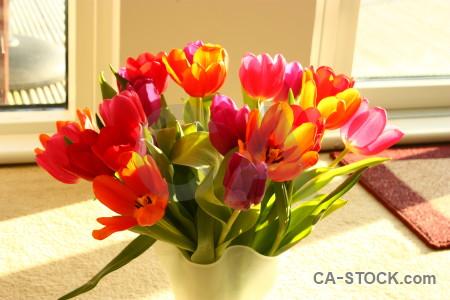 Bouquet plant vase tulip flower.