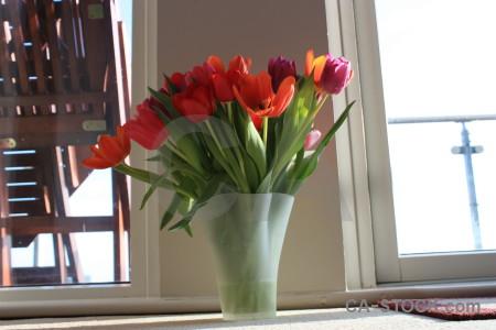 Bouquet tulip flower plant vase.