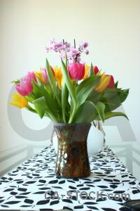 Bouquet tulip plant vase flower.
