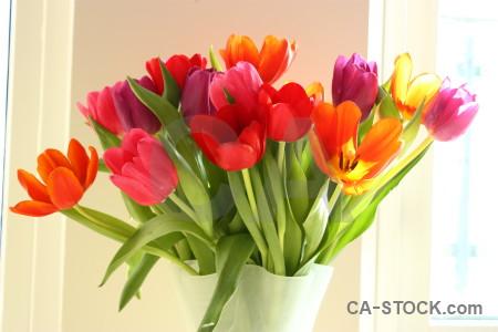 Bouquet vase tulip plant flower.